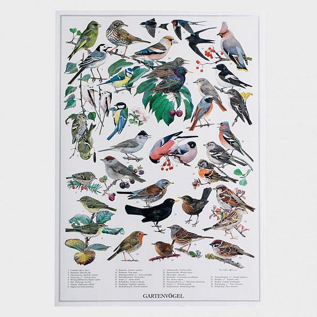 Poster Gartenvögel
