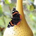 Schmetterling-Futterstelle